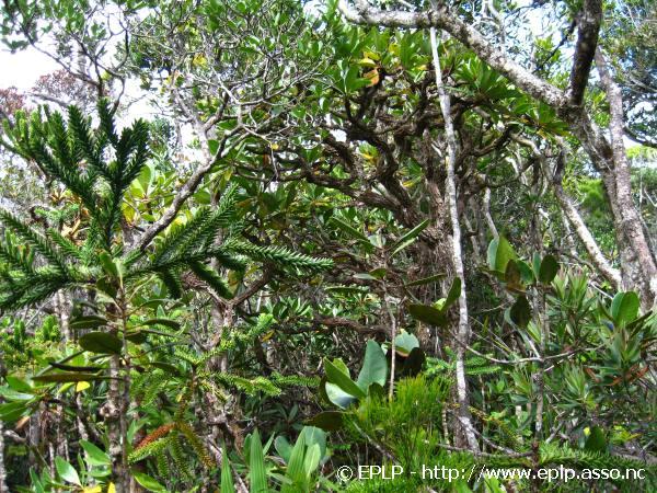 Biodiversite003.jpg