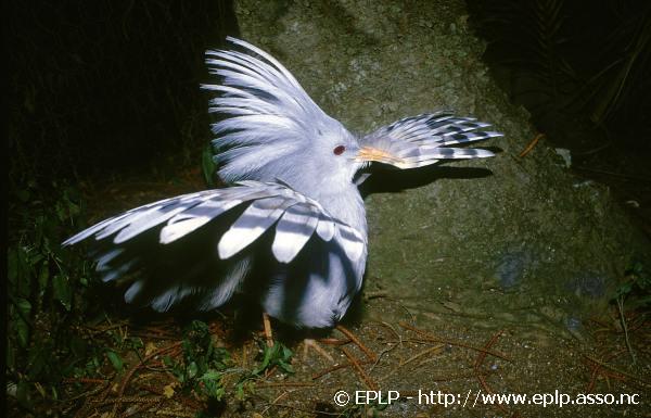 Biodiversite012.jpg