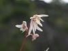 Flore019