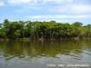 Mangrove002.jpg