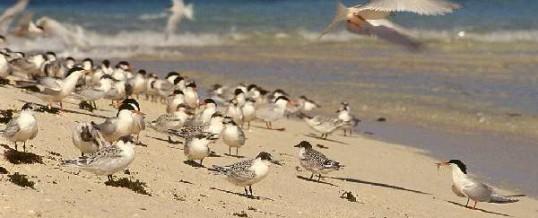 Conférence Indicateurs pour la biodiversité en Nouvelle-Calédonie