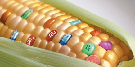 Territoires d'Outre-Mer : des OGM en liberté