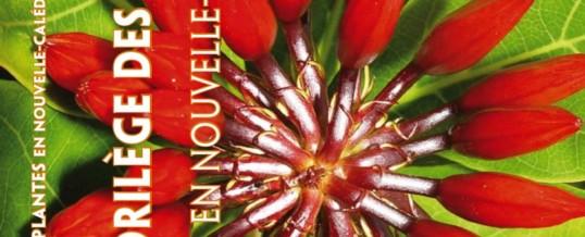 Causerie Florilège des plantes en Nouvelle-Calédonie