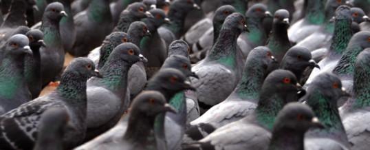 Destruction d'oiseaux au Port Autonome de la Nouvelle Calédonie