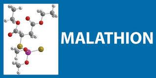 Malathion : En 2017,  c'est encore non pour EPLP !