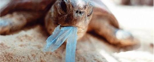 La fin des sacs plastiques en Nouvelle-Calédonie